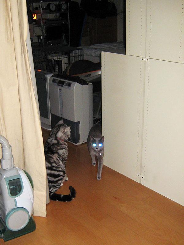 まさか切手の図柄にされるとは予想もせずに夜な夜な遊びまくる拙宅猫ご一行様。
