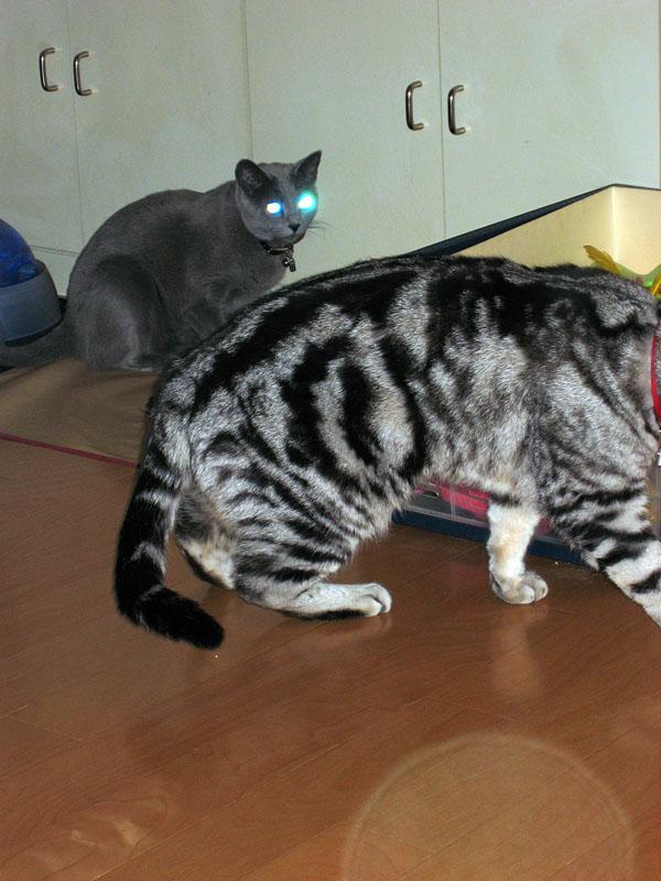 猫ピカー!! VFDより光るゼ!! シマシマ模様はサイバー……でもありませんな。