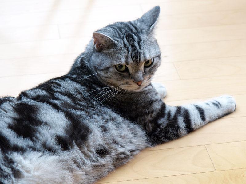 MacOSの最近のコードネームは猫科だったのかーッ!? ニャニャ。