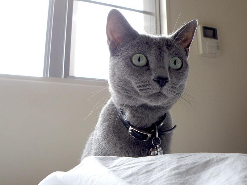 窓際にて窓猫中に声をかけたらニャーと鳴いてこっちに来るのであり、非常によろしいと思った。