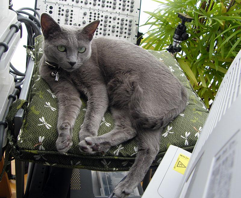 DOEPFER猫こと、拙宅猫うか様。シンセの「ミュィ~ン」という音に激反応するゾ!!
