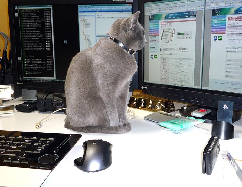 diNovo Edgeと拙宅猫うか様。Webページを読むふりをして仕事を邪魔しているの図。