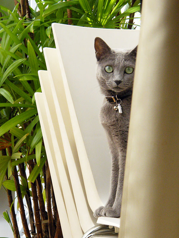拙宅猫うか様の半分猫状態。いや、この状態は七分猫という感じか。姿勢は覗き見だが、眼はガン見だったりする。