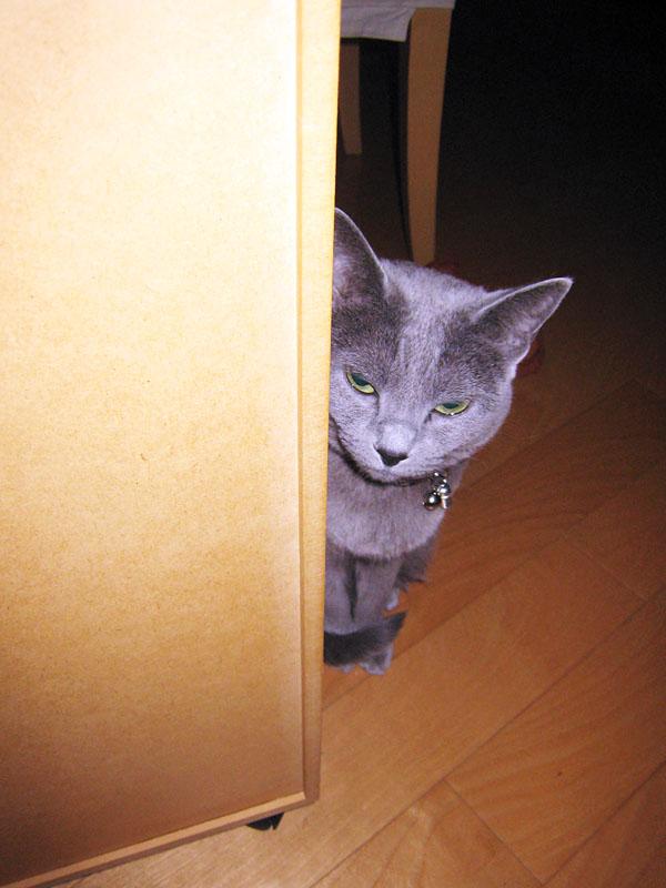 そのハリガネで遊びたいけどハンダの煙が臭いからヤなのだ、とか思っているかもしれない拙宅猫うか様。