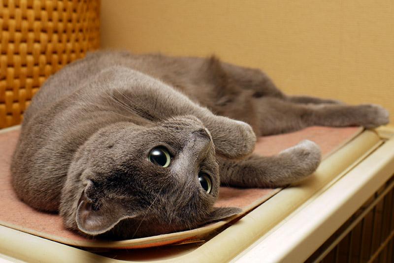 (4)毎日のようにホットカーペット(犬猫用)の上でゴロゴロしている拙宅猫うか様であらせられる。
