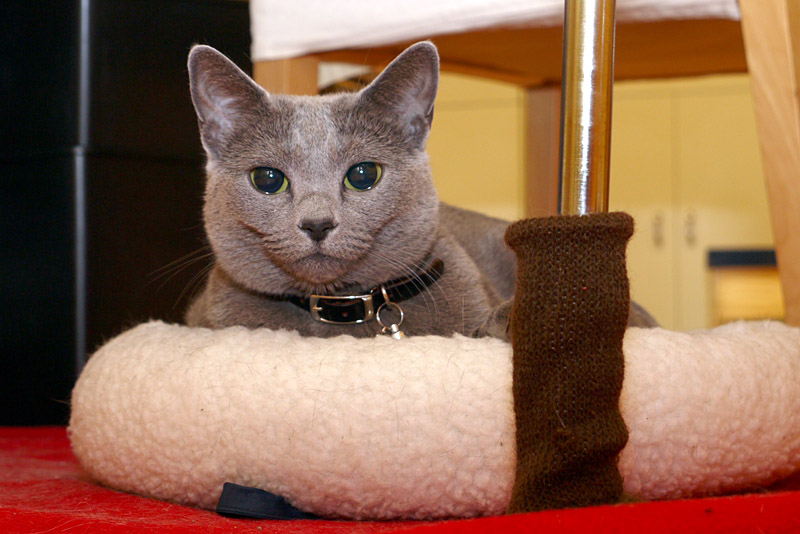 比較的にコンパクトな拙宅猫うか様。なぜか時々、目がうるうるしている!!