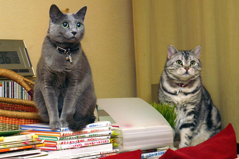 ニャバゴってニャにかしら? LEDらしいよ。LEDってニャにかしら? ピカッと光るらしいよ。猫ピカかしら? 猫ピカーッ、かも。