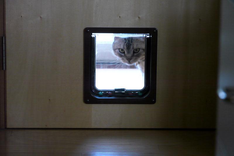 (1)気づくと猫ドアの外にやってきていたりするとろ様。ニャ。おまえはおまえは。ニャにしてるニャ。みたいな。