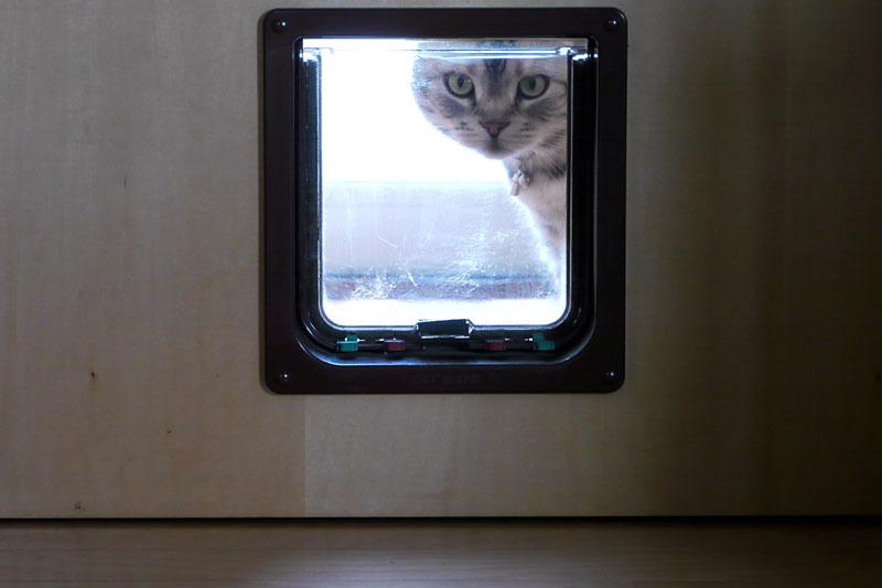 (2)しばらくそのまま室内を観察。ニャニャ、仕事をしている予感!! 的な。