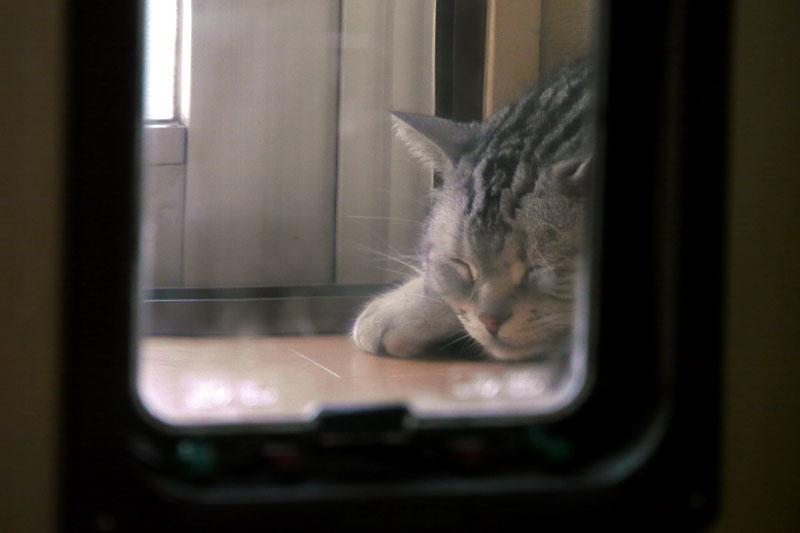 (5)たまに寝返り時の鈴の音が聞こえたりもする。