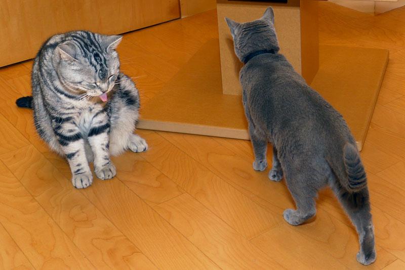 イニャストってニャんですか? 猫らしいよ。猫なのかしら? あ、違った描だった。みたいな。