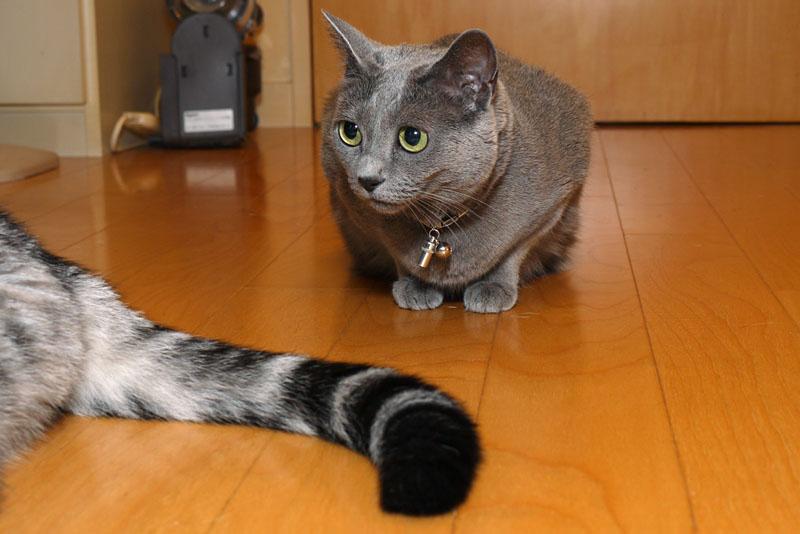 ニャーシーニャーディーってニャにかしら? 猫写真らしいよ。またネットに載せる気ね。載せる気らしいよ。みたいな。