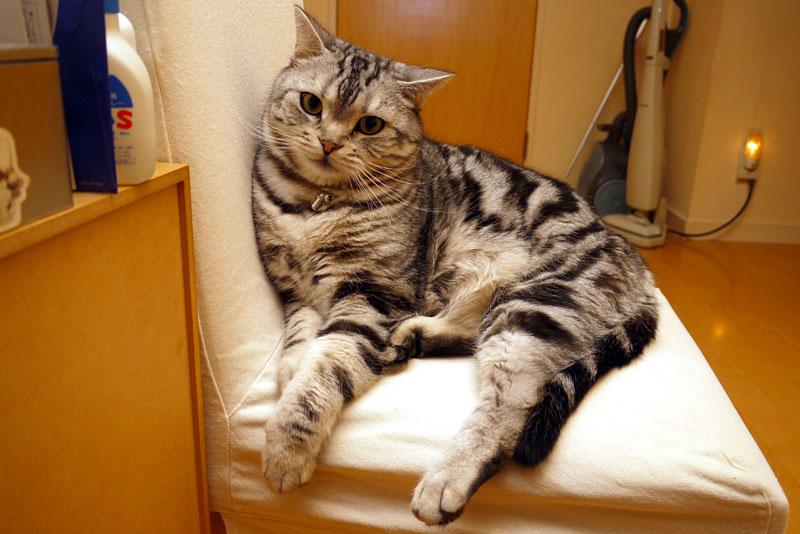 (1)これはぼくの椅子ですよ。座っちゃダメ。
