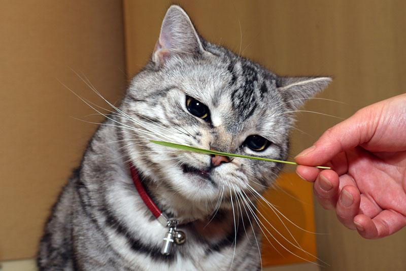 (5)じゃあもう一本どうぞ~。ニャ、これも食べるニャ!!