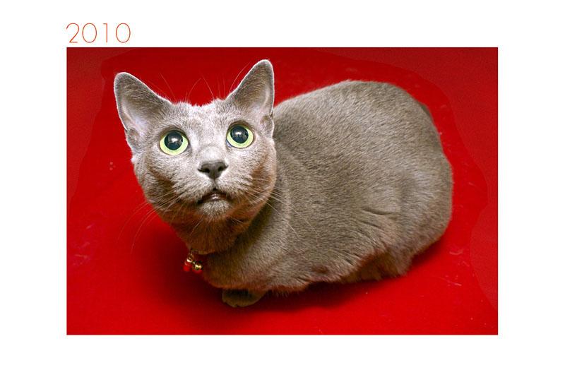 採用案その2。おめでたい雰囲気の拙宅猫うか様。
