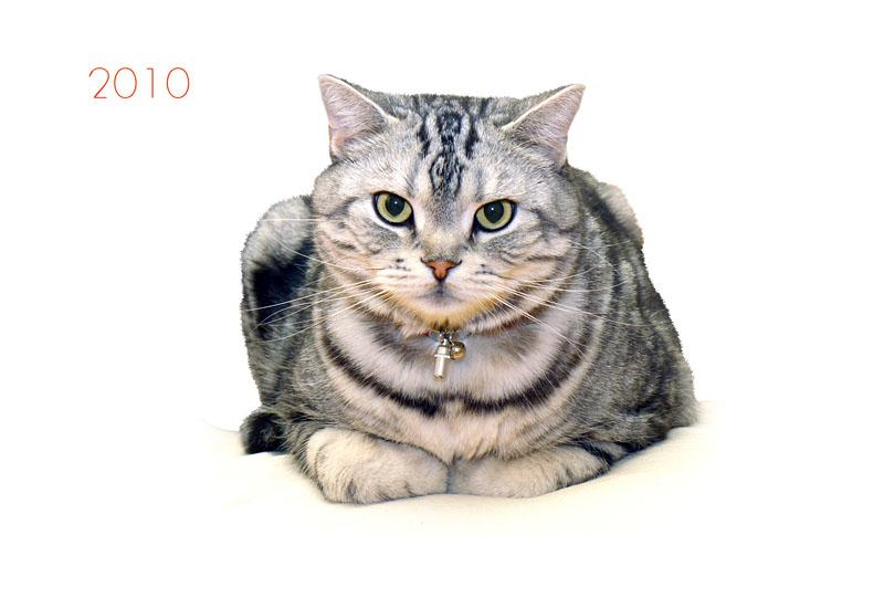 採用案その3。かしこまった雰囲気の拙宅猫とろ様。