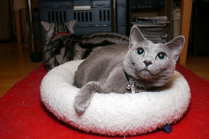 LumiQuest 80-20を使ってテーブルの下の拙宅猫御一行様を撮影。バウンス撮影なので影の出方が自然であり、かつ、猫の目にキャッチライトが入っている。