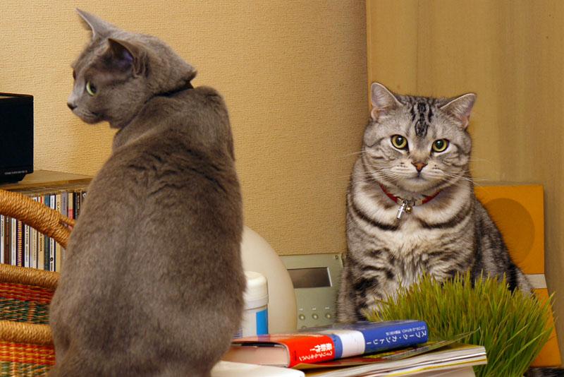 ニャプティオニャイテンってニャにかしら? 猫の顔を憶えるらしい。ホントかしら? どうだろう? みたいな。