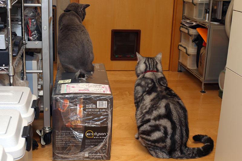 """ポメニャってニャにかしら? キーボードらしい。じゃあ<a href=""""http://k-tai.impress.co.jp/docs/column/stapablog/20090625_338165.html"""">キーボード猫頭ごしごし</a>ができるわね。できるね。的な"""