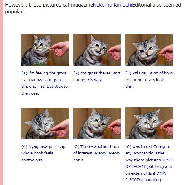 スタパブログの猫エントリの一部を、Googleにより英語へと翻訳した様子。「ニャ」の部分が「Meow」と訳されたりする