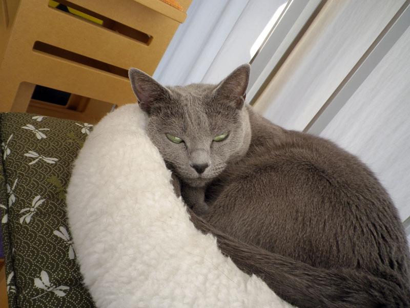 拙宅猫うか様の顔を認識して自動的に撮影しちゃうOptio I-10。顔が横向きだったりすると認識しない
