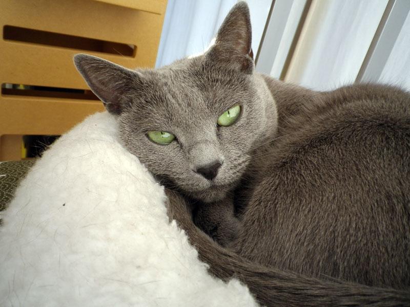 拙宅猫うか様を登録し、自動認識/撮影した例。登録/選択した猫が認識されると、Optio I-10が自動的に写真を撮るんですな。基本的に顔の登録は真正面なので、撮られる写真も真正面のペット顔。ペットのカメラ目線的な写真が多々得られる