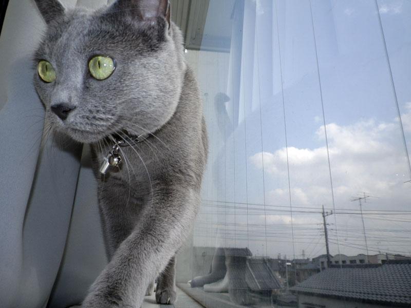 カーテンと窓の間の通路的空間を歩いてきたうか様をノーファインダーでシュート!!
