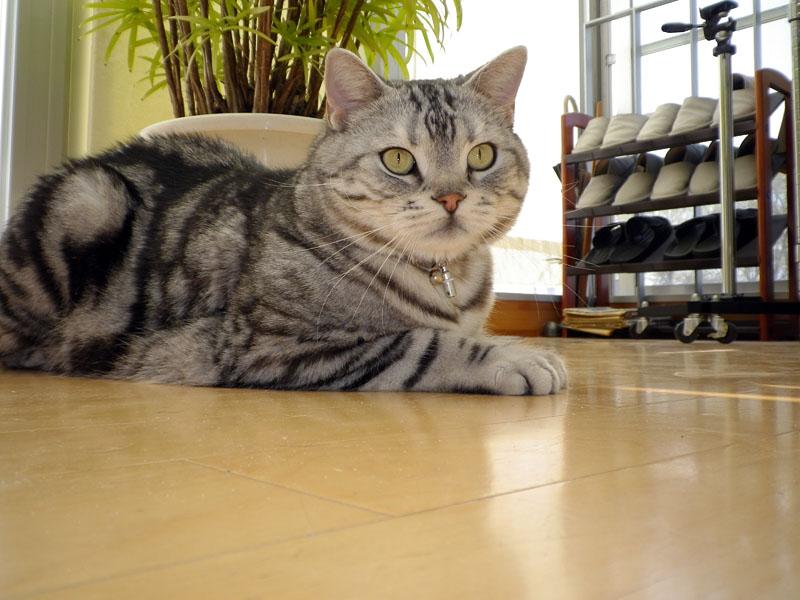 Optio I-10を床に置いて自動猫顔認識&自動撮影!!