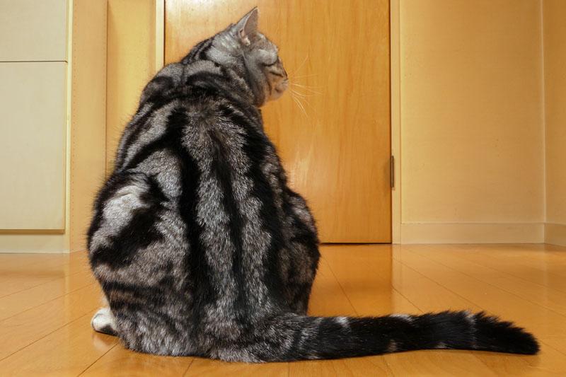このナス型体形というか猫型体形というか、なかなかイイ!! 尻尾もイイ!!