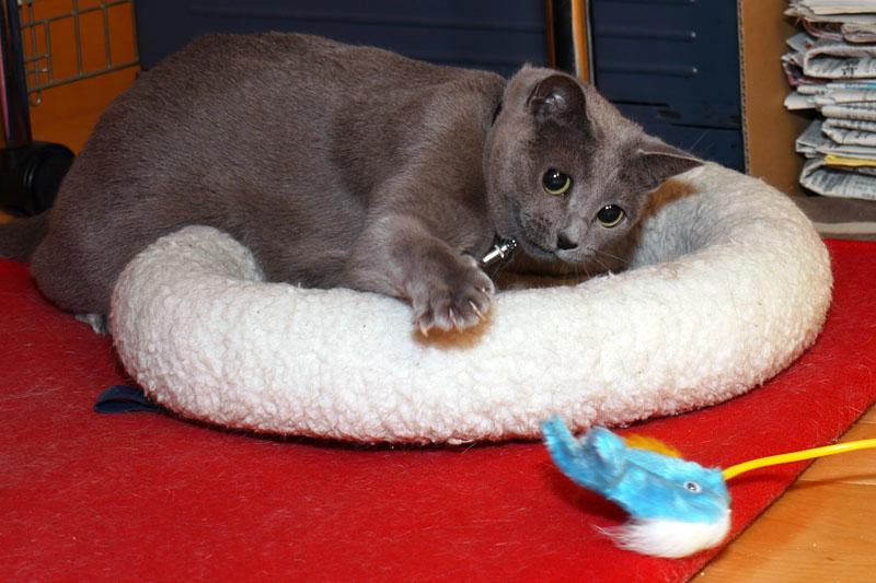 うか様が本気で遊ぶと、主に待ち伏せしまくり&猫パンチだったりする。