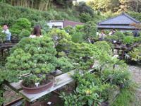 バスツアーの目的地となった千葉県・印旛村の盆栽園「福島園」