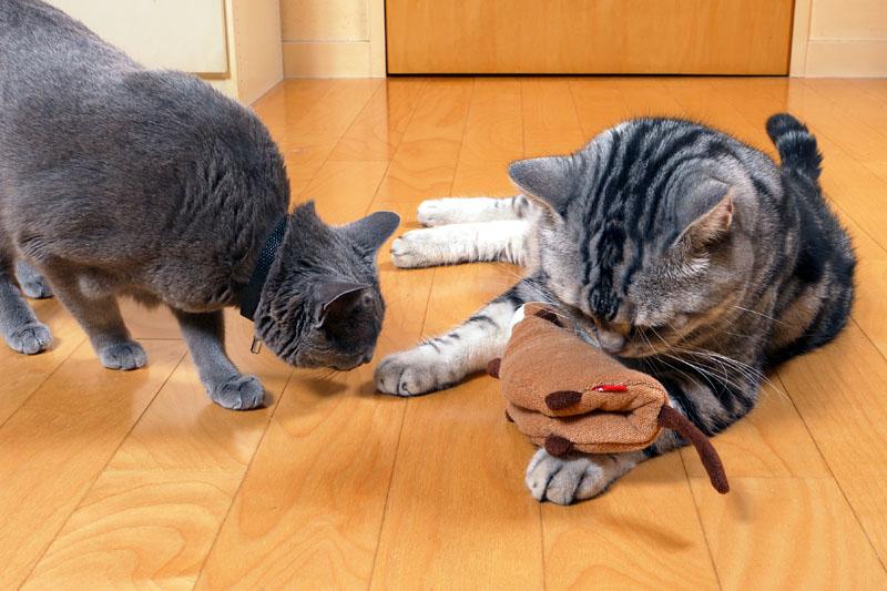 猫は心拍数が高いかもしれないわね。しれないよね。でも測ったことはないわね。ありません。みたいな