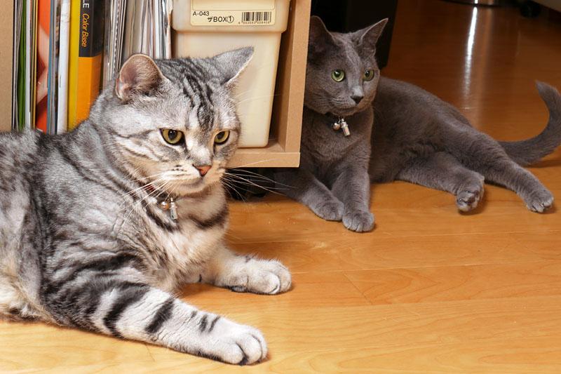 "<a href=""http://bb.watch.impress.co.jp/stapa_blog/archives/2009/07/led_2.html"">ニャバゴ</a>ってニャにかしら、って前に言ったかしら? 猫だから忘れました。ニャニャニャ。ニャ。的な"