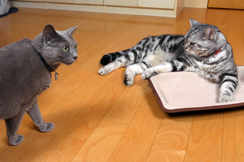 回文ってニャにかしら? 「竹やぶ焼けた」とか「機敏な仔猫何匹?」とかだよ。仔猫いるかしら? いニャい。いたら楽しいわね。楽しいよね。ニャ。ニャ。的な