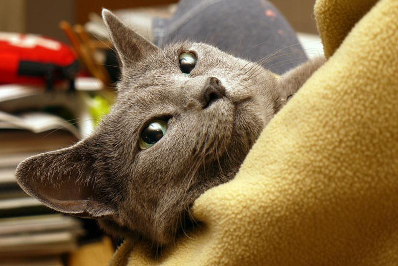(2)徐々に眠くなったりするが、抱かれたままでは寝ない