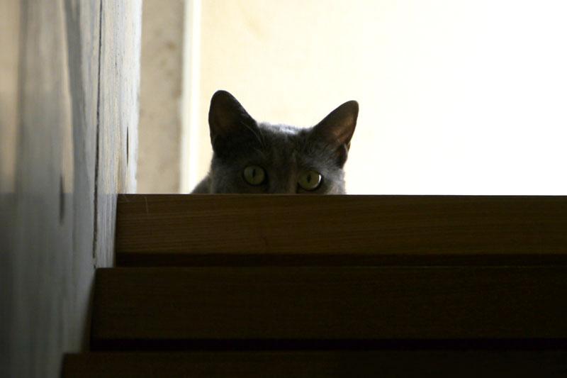 (2)横方向半分猫中の様子。警報を発した後、必ずこの横方向半分猫動作を行うのが、うか様スタイル