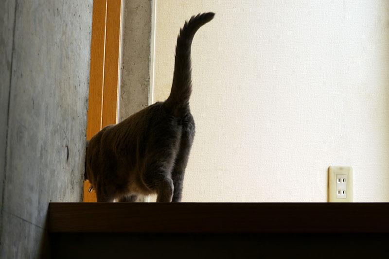 (3)そして近寄っていくと尻尾を立ててゴロゴロ言ったりしている。これが拙宅階段警備猫うか様である