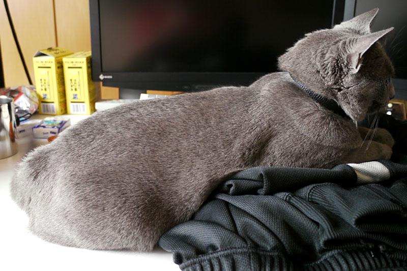 (3)このような段差状態になっても余裕で寝ているのだ