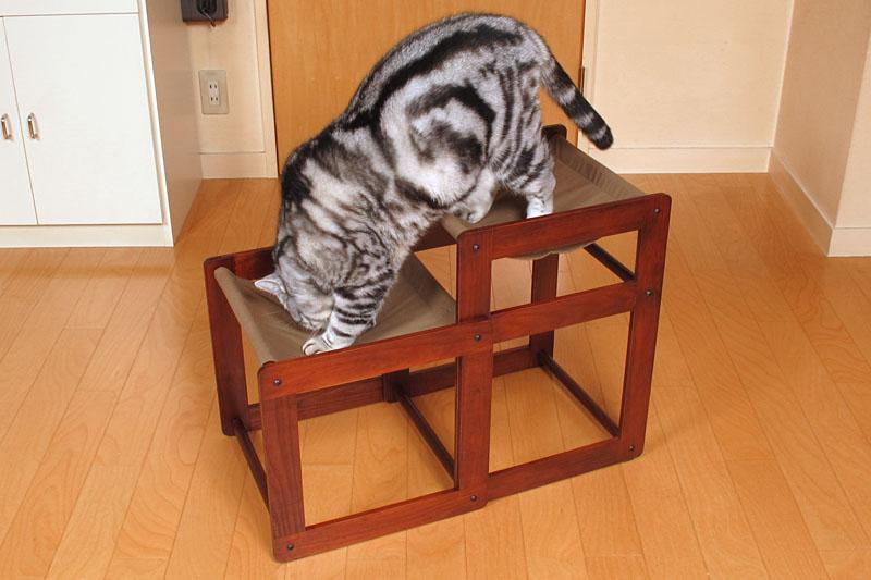(4)飽きてきたから下りるニャ。猫だからすぐ飽きるニャ
