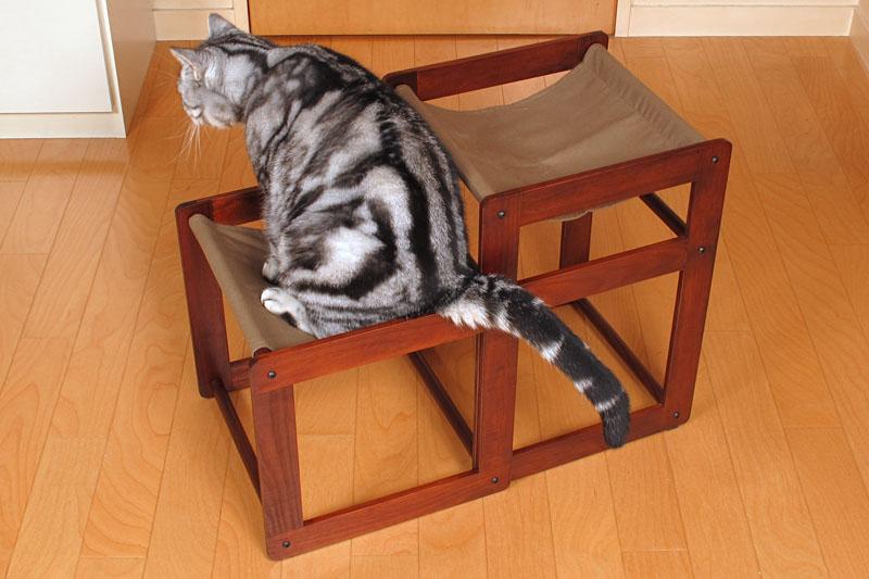 (5)と見せかけて下段に座ってみた。尻尾がはみ出すニャ