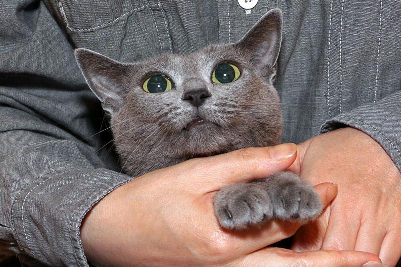 (4)ニャッ!! これは爪切りの予感。どうしましょう!!