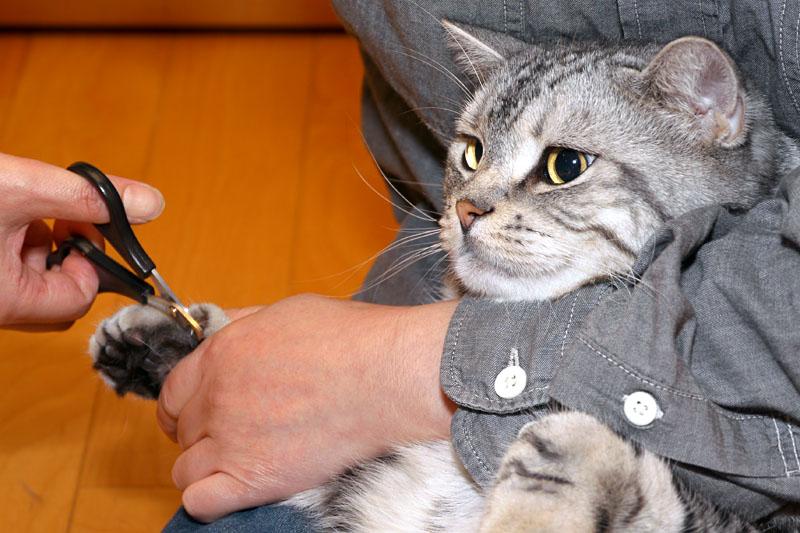(1)あ。おまえはおまえは。爪を切るのだなおまえは。
