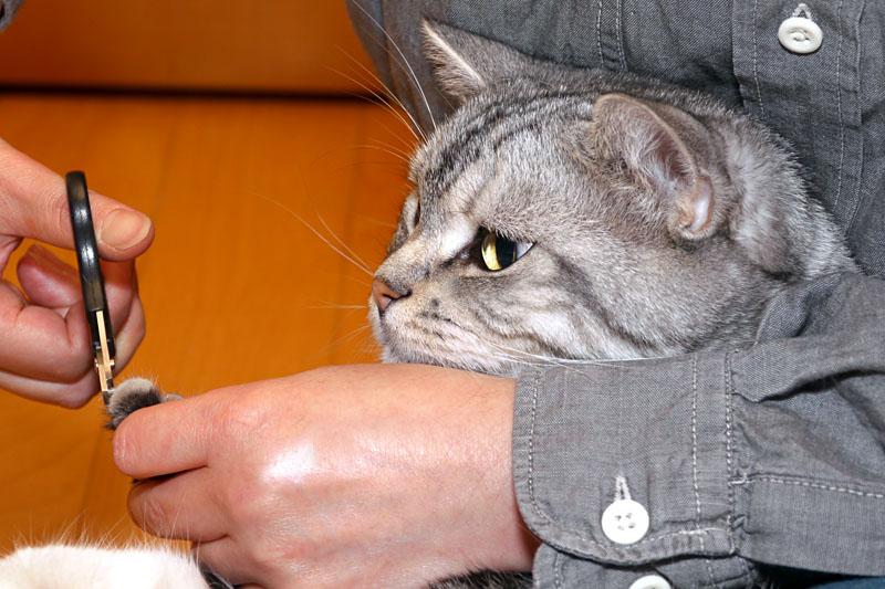 (2)ぼぼぼぼくは爪を切られても平気な猫ニャんです。