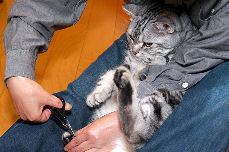 (4)おまえはおまえは。足の爪も切るのだなおまえは。