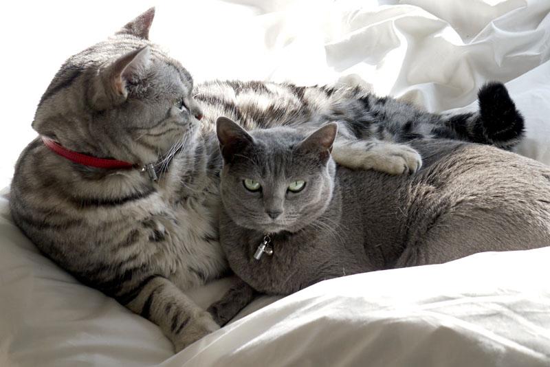 ニ~ニャッハァってニャにかしら? 喜びの表現らしい。うかちゃんは猫なので喜ぶとゴロゴロ言います。ぼぼぼ、ぼくもです。ニャ。ニャニャ。みたいな。