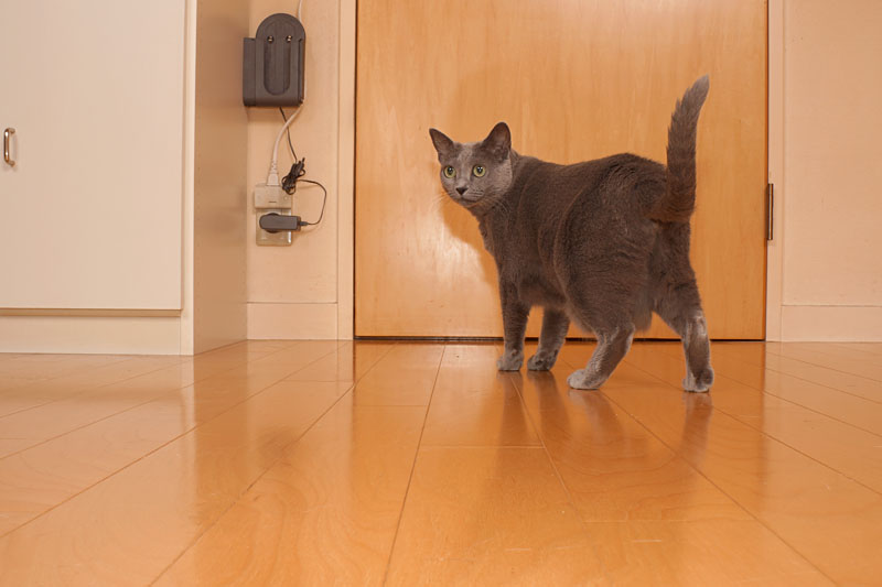 (1)あ。おまえは。うかちゃんはドアの向こうに行きたいんですよミャーオ。