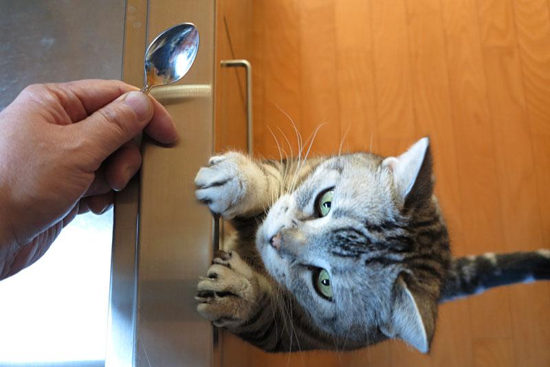(5)おまえはおまえは。猫缶おくんニャさい。