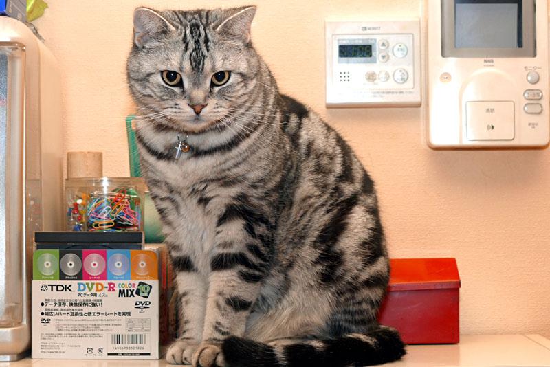 (1)ぼぼぼ、ぼくのおでこには猫がいるの。
