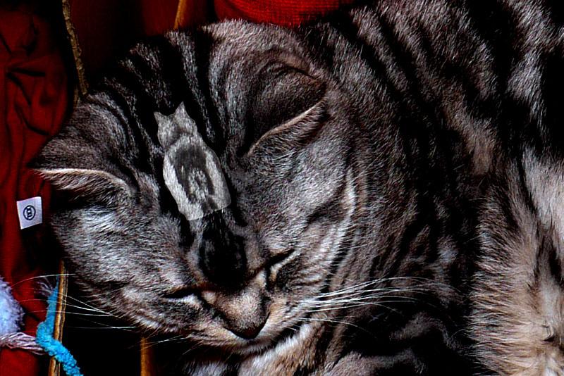 (6)ぼぼぼぼ、ぼくに似てる猫がいるの。