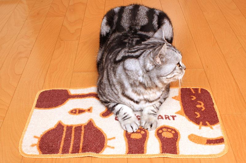 (2)これがスフィンクス座りですよ。おまえはおまえは。ニャニャ。